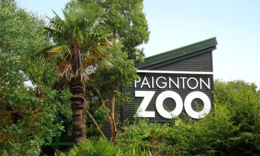 Paignton-Zoo-Environmental-Park-United-Kingdom